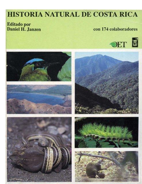 Alta imagen detallada de hojas verdes nat104 Art Print A4 A3 A2 A1