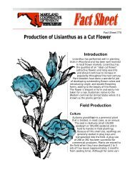 Production of Lisianthus as a Cut Flower - University of Maryland ...