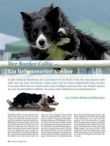 Der Border Collie – Ein liebenswerter Streber