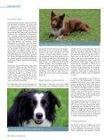 Der Border Collie – Ein liebenswerter Streber - Seite 3