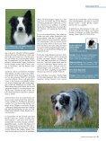 Der Border Collie – Ein liebenswerter Streber - Seite 6