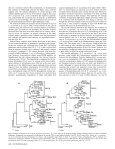 Stepwise Evolution of Races in Fusarium oxysporum f. sp. ciceris ... - Page 5
