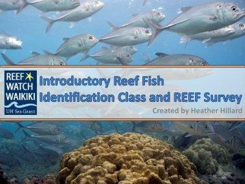 hawaiian tidepool and shallow reef identification hawaii gov