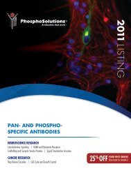 pan- and phospho- specific antibodies neuroscience research