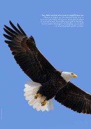 Den Adler zeichnet eine enorme Jagdeffizienz aus: Obwohl er ...