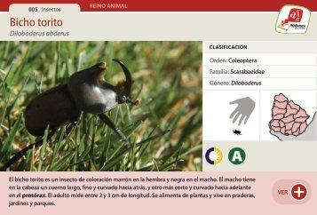 Bicho torito - Manosanta