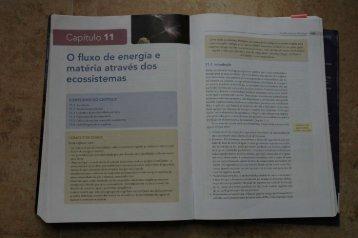 O fluxo de energia e matéria através dos