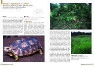 Kinixys belliana nogueyi - Association du refuge des tortues