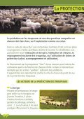 La protection des troupeaux : fonctionnement ... - Pays de l'ours - Page 2