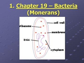 Monerans (Bacteria)