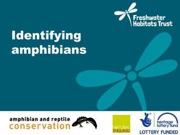 Amphibian-identification2