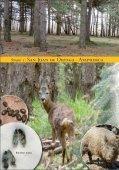 SAN JUAN FOLLETO INGLES - Aula de Medio Ambiente en Burgos ... - Page 4