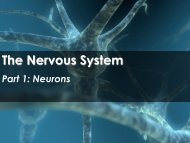 The Nervous System - Science with Mr. Enns