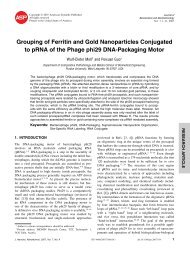 Grouping of Ferritin and Gold Nanoparticles Conjugated to pRNA of ...