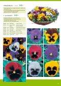 123 серия Cottage Viola wittrockiana серия Karma F1 - Satimex - Page 3