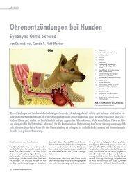 Ohrenentzündungen bei Hunden