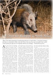 Full Draw for Bushpigs in South Africa - One on One Safaris / About us