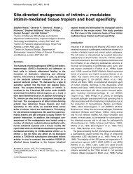 Site-directed mutagenesis of intimin a modulates intimin ... - ZMBH