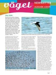 Newsletter 1/09 Mai-Juni - Vögel - Magazin für Vogelbeobachtung