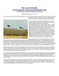 The Luck of the Ibis A new species record for Beaverhill Lake