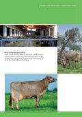 Brown Swiss_All languages.indd - Page 5