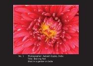 No. 1 Photographer: Aakash Gupta, India Title: Bee-ing Fed Shot in ...