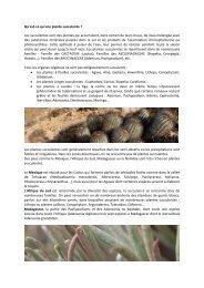 Qu'est-ce qu'une plante succulente ? Les succulentes sont des ...