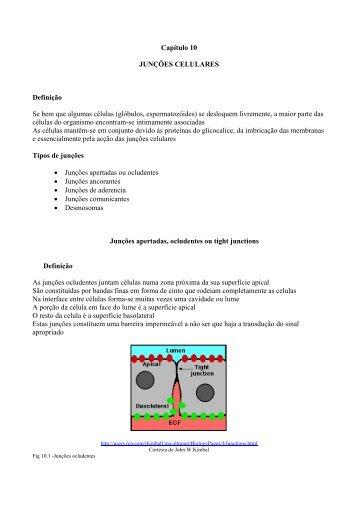Capítulo 10 JUNÇÕES CELULARES Definição Se ... - WebBiblioteca
