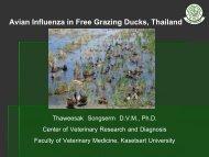 AI in ducks 3_Thaveesak.pdf - Flutrop CIRAD Avian Influenza