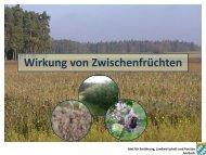 Wirkung von Zwischenfrüchten - Amt für Ernährung, Landwirtschaft ...