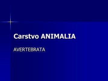 Animalia 1