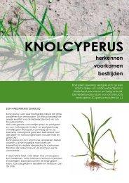 KNOLCYPERUS - Productschap Tuinbouw
