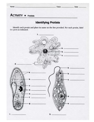 Worksheets Protists Worksheet protist magazines identifying protists worksheet