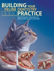 Building Your Feline Dentistry Practice - Hungarovet