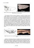 Datation et contexte archéologique de la nouvelle omoplate gravée ... - Page 7