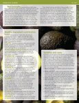 Avocados - Clemson University - Page 2