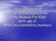 Differentiation of chum salmon populations in the Russian Far