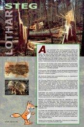 Tafeln - Lernen @ Natur - Raum.ch