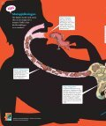 Kan matspjälkning vara roligt? - Natur och Kultur - Page 4
