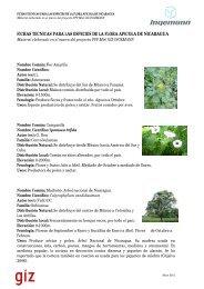 fichas tecnicas para las especies de la flora apicola ... - MASRENACE