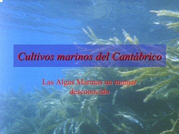 Cultivos marinos del Cantábrico
