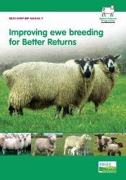 Manual 9 – Improving ewe breeding for better returns - Eblex