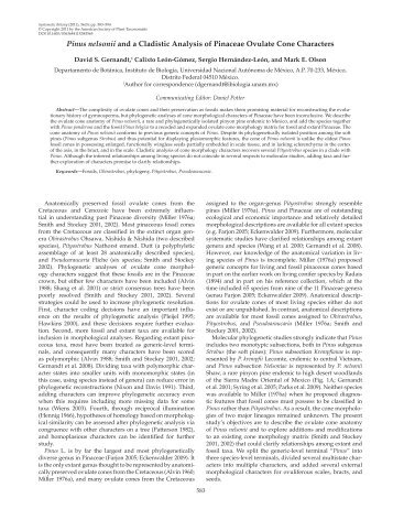 Pinus nelsonii and a Cladistic Analysis of Pinaceae ... - BioOne