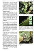 Oïdium - AGROMETEO - Page 2