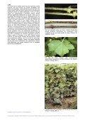 Oïdium - AGROMETEO - Page 3