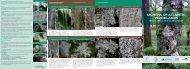LICHENS OF ATLANTIC WOODLANDS - Plantlife
