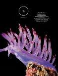 Die Vermessung des Ozeans - Docwarter.com - Seite 2