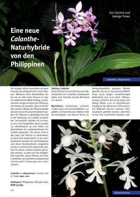 A New Dendrochilum Species from the Philippines