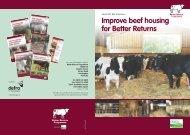 Improve beef housing for Better Returns - Eblex