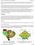 Cerebellum - Page 3